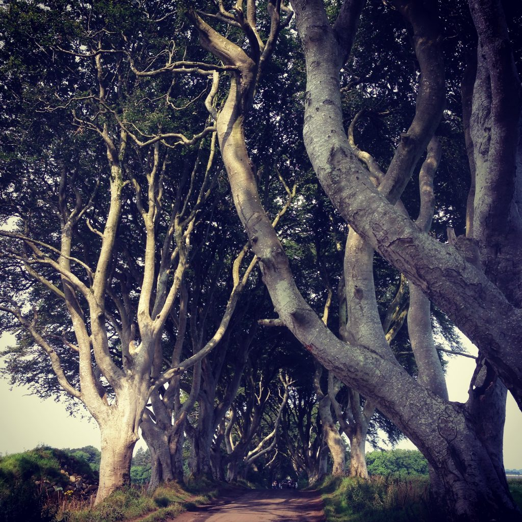The Dark Hedges Game of Thrones Northern Ireland